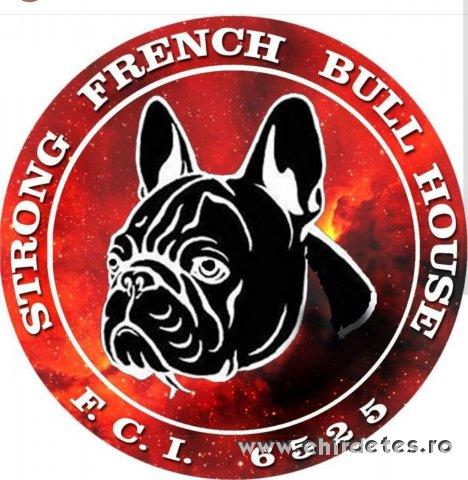 Francia  bulldog kölykök Serbia