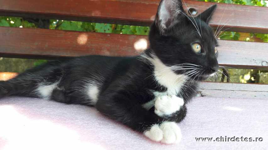 Gyönyörű kiscicák ingyen