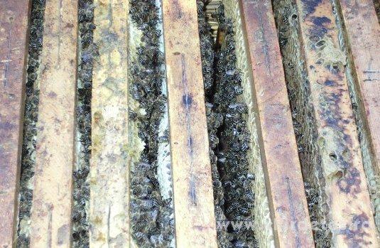 b04e0e99d6 Méhcsaládok kaptárral együtt eladók Zala megyében Méhcsaládok kaptárral  együtt eladók Zala megyében ...